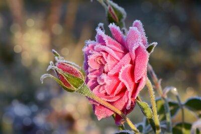 Nálepka květiny 529