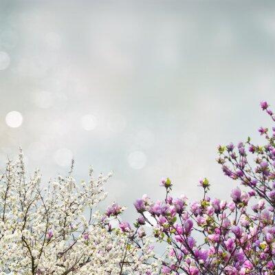 Nálepka Kvetoucí magnólie strom