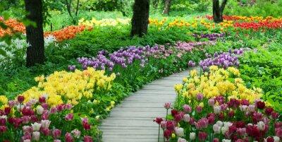 Nálepka Kvetoucí tulipány v zahradě