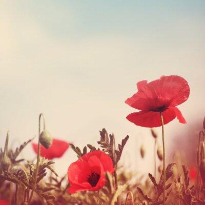 Nálepka květy máku retro stylizovaný snímek