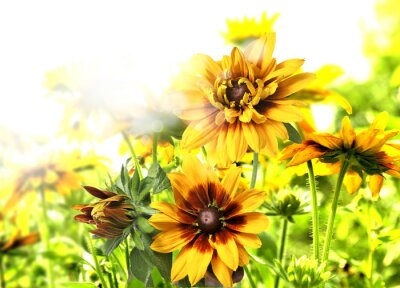 Nálepka kwiaty