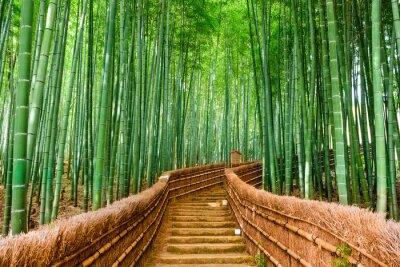 Nálepka Kyoto, Japonsko Bamboo Forest