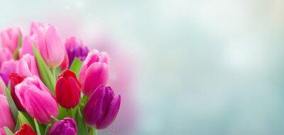 Nálepka kytice růžových a purpurových tulipánů