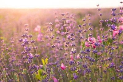 Nálepka Lavender field.