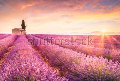 Nálepka Lavender fields at sunrise near Valensole, Provence, France