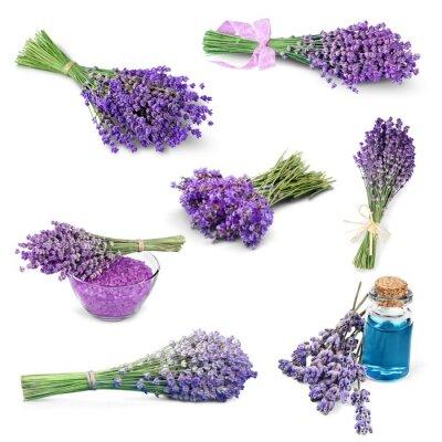 Nálepka Lavender, Flower, Lavender Barevný.