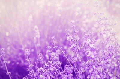 Nálepka Lavender Mood