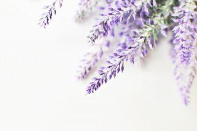 Nálepka Lavender větev na bílém pozadí