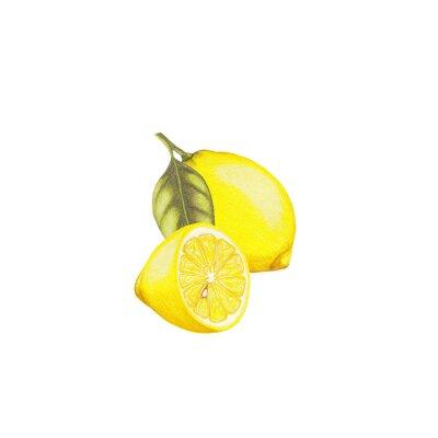 Nálepka Lemon ilustrační