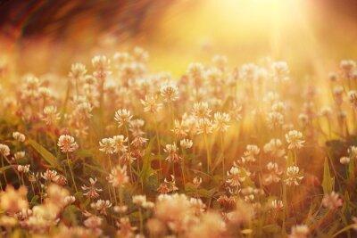 Nálepka Letní krajina pozadí slunce květiny Rays