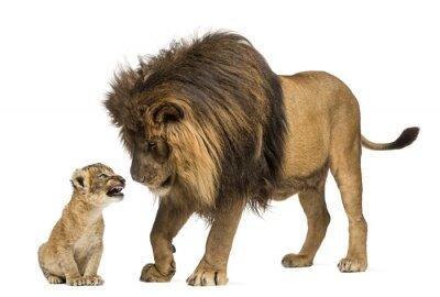 Nálepka Lion stál a díval se na lvíče