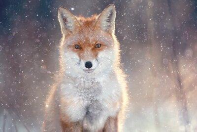Nálepka liška v zimě lese Pretty
