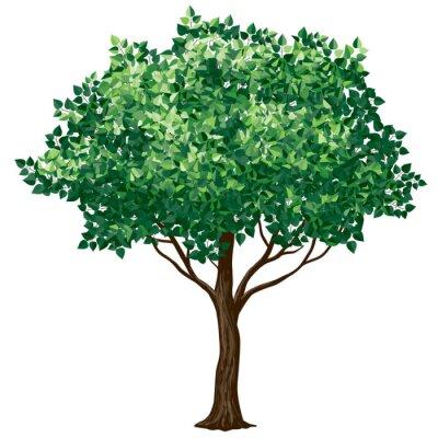 Nálepka Listí stromů