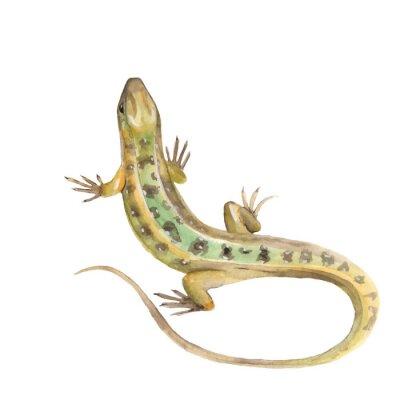 Nálepka Lizard. Watercolor illustration in vector