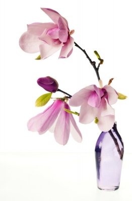 Nálepka Magnolia Jane Květy