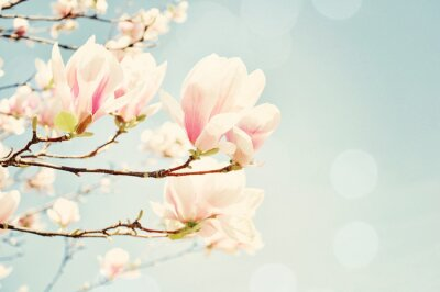 Nálepka Magnolia květ s sluneční erupce. Shallow pole hloubky.