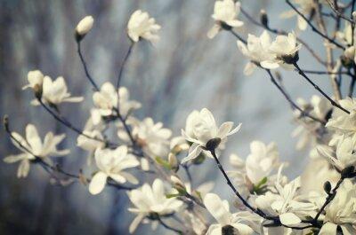 Nálepka Magnolia květiny