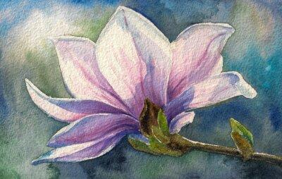 Nálepka Magnolia květy na branch.Watercolors.