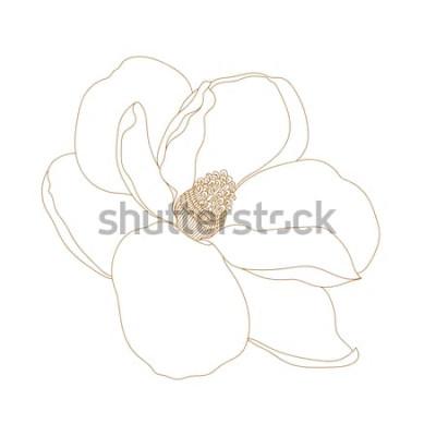 Nálepka Magnólie květ, pohled shora, izolované na bílém. Grafické ručně kreslenou květy magnólie. Vector.Magnolia květina, kresba a skica s černou a bílou čárovou grafiku.