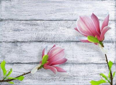 Nálepka Magnólie květiny na pozadí ošumělých dřevěných prken
