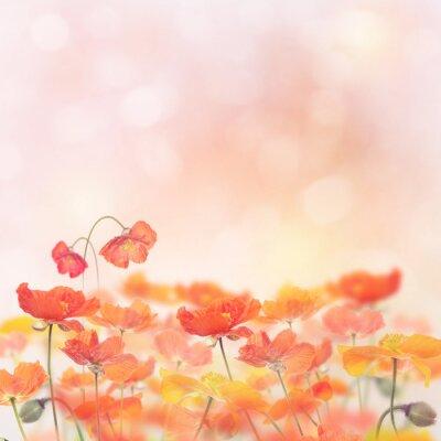 Nálepka Mák květiny Blossom