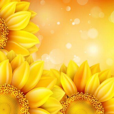 Nálepka Makro Sunflower Background. EPS 10