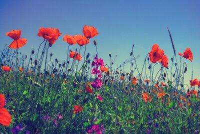 Nálepka Máku květy proti obloze