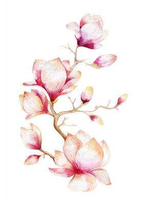 Nálepka Malování Magnolia květy tapety. Ručně tažené akvarel květinové