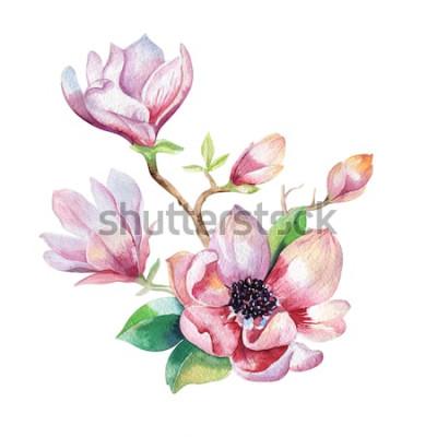 Nálepka Malování tapety Magnolia květina. Ručně tažené akvarel květinové ilustrace. Květinový dekorativní přírodní prvek. Vintage umění watecolour pozadí.