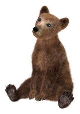 Nálepka Malý medvěd hnědý