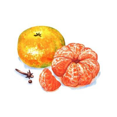 Nálepka mandarinka nebo mandarinky ovoce na bílém pozadí
