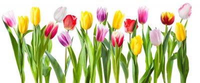 Nálepka Many different tulip flowers isolated