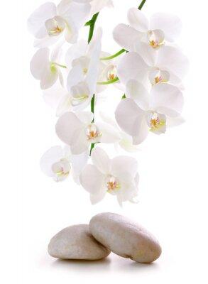Nálepka Masážní kameny s orchidej.