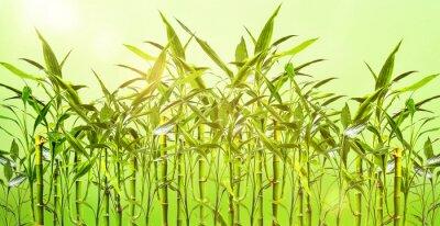 Nálepka Mladá Bambuspflanzen vor grünem pozadí