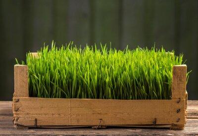 Nálepka Mladé zelené výhonky