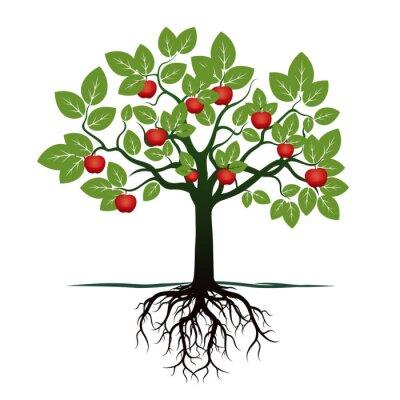 Nálepka Mladý strom se zelenými listy, kořeny a červená jablka. vektorové ilustrace