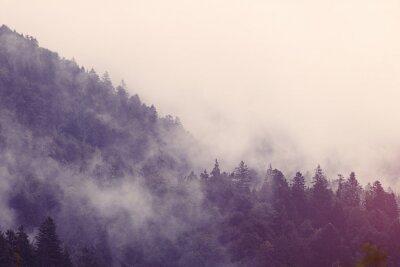 Nálepka Mlha v lese
