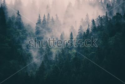 Nálepka Mlžná krajina s jedlemi lesem v retro stylu