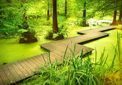 Nálepka Moderní chodník nebo lávka přes rybník v lese. Staré stromy stojící v močálu nebo bažině v lese. Sunbeam a hladké světlo dopadající přes vrcholky stromů.