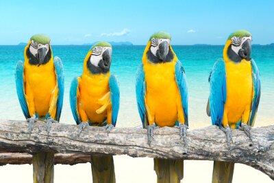 Nálepka Modrá a zlatá papoušek na tropické krásné pláže a moře