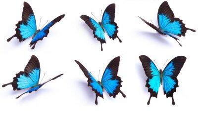 Nálepka Modré a barevný motýl na bílém pozadí