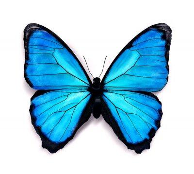 Nálepka Modrý motýl