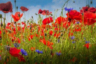 Nálepka Mohnblumen - Poppy Field