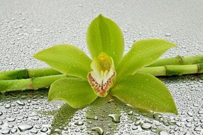 Nálepka Mokra Orchidea z bambusem