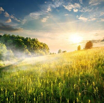 Nálepka Morning over blossoming field