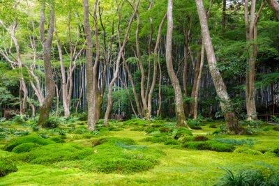 Nálepka Moss výhled do zahrady v Arashiyama, Kyoto