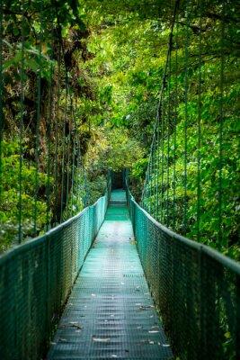Nálepka most v deštném pralese