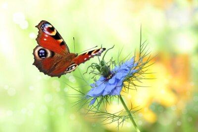 Nálepka motýl 198