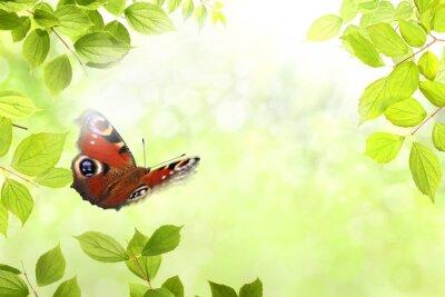 Nálepka motýl 204