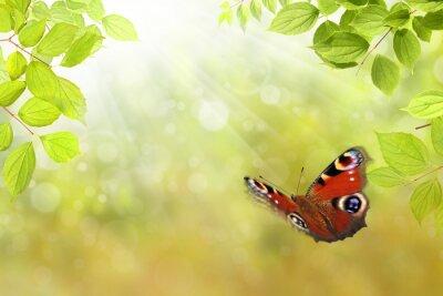 Nálepka motýl 206
